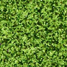 Crafts4U MicroFine Glitter Lime Green 20g Jar