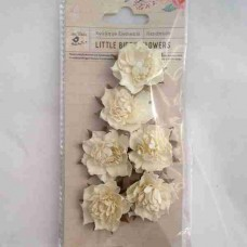 Little Birdie Camilia Classic Cream 6pk CR63147
